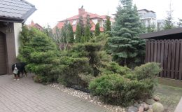 4a IMG_6041