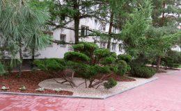 Bonsai w osiedlu (3)