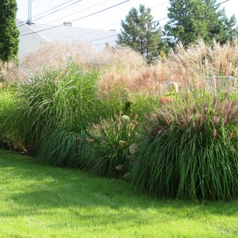Ogród przed biurem – Raszyn