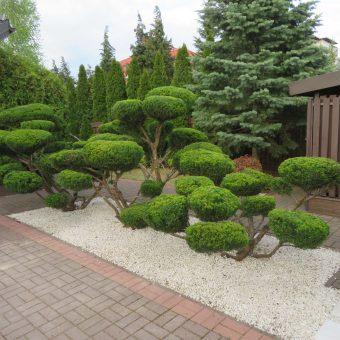 Ogród z bonsai – Wawer
