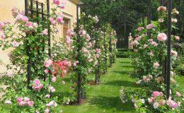 Konstancin Francuski ogród (16)
