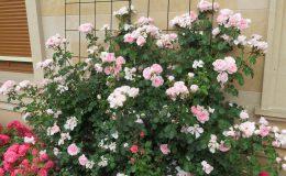 Konstancin Francuski ogród (2)