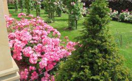 Konstancin Francuski ogród (29)
