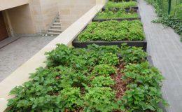 Konstancin Francuski ogród (36)