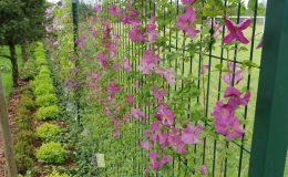 Konstancin Francuski ogród (37)