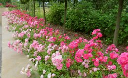 Konstancin Francuski ogród (39)