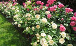 Konstancin Francuski ogród (8)