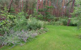 – Ogród leśny Józefów F (12)
