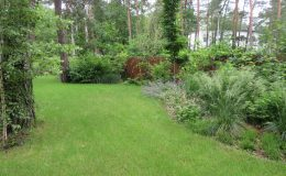 – Ogród leśny Józefów F (16)