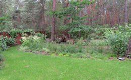 – Ogród leśny Józefów F (28)