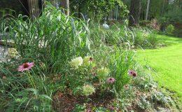 – Ogród leśny Józefów F (4)