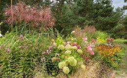 Ogród przy boisku Emów 30 (2)
