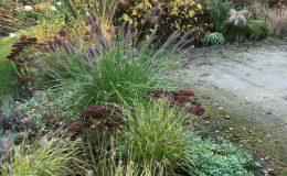 Ogród przy boisku Emów 30 (4)