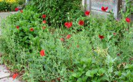 Ogród wiejski Chata Wandy Brzeźce (1)