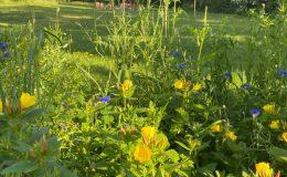 Ogród wiejski Chata Wandy Brzeźce (14)