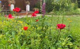 Ogród wiejski Chata Wandy Brzeźce (8)