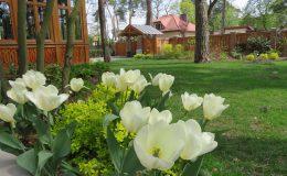 Ogród ze świdermajerem (1)