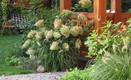Ogród ze świdermajerem (13)