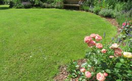Ogród ze świdermajerem (14)
