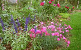 Ogród ze świdermajerem (15)