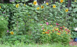 Ogród ze świdermajerem (18)