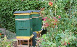 Ogród ze świdermajerem (20)