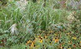Ogród ze świdermajerem (21)