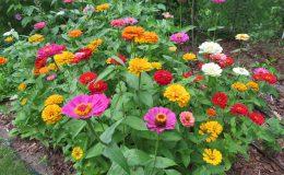 Ogród ze świdermajerem (22)