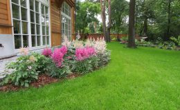 Ogród ze świdermajerem (28)