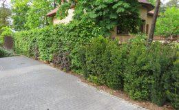 Ogród ze świdermajerem (37)