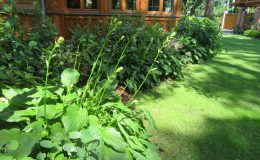 Ogród ze świdermajerem (39)