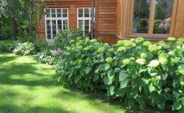 Ogród ze świdermajerem (4)