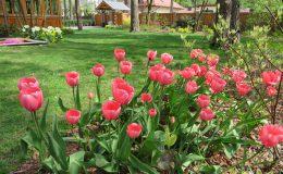 Ogród ze świdermajerem (6)