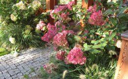 Ogród ze świdermajerem (8)