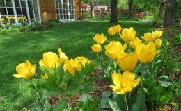 Ogród ze świdermajerem (9)