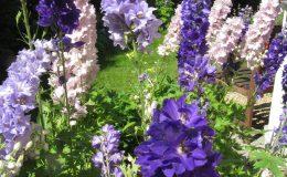 Pyry – ogród angielski (11)