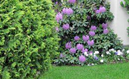 Pyry – ogród angielski (15)