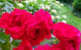 Pyry – ogród angielski (24)