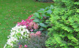 Pyry – ogród angielski (29)