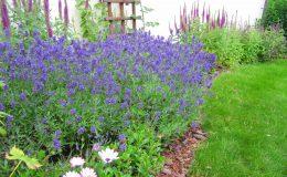 Pyry – ogród angielski (3)