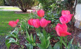 Pyry – ogród angielski (30)