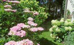 Pyry – ogród angielski (4)
