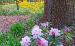 Tajemniczy ogród Sadyba (10)