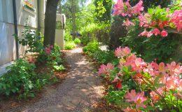Tajemniczy ogród Sadyba (6)