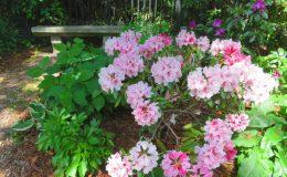 Tajemniczy ogród Sadyba (8)