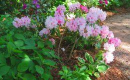Tajemniczy ogród Sadyba (9)
