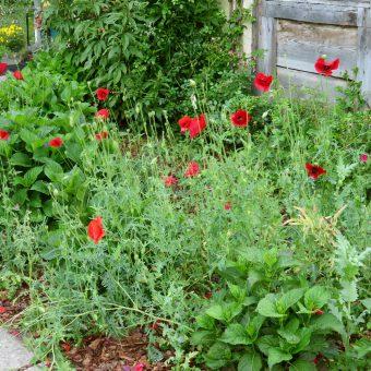 Ogród wiejski – Brzeźce