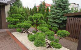 ogród Wawer (10)