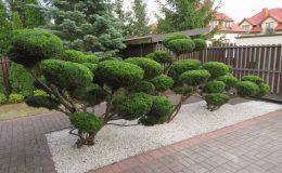ogród Wawer (6)